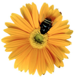 bee_flower_buzz